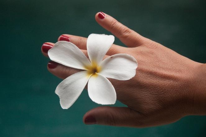flower-1531824